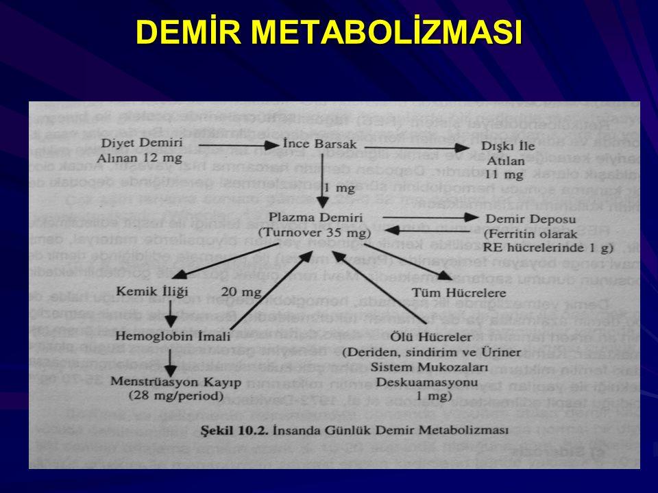DEMİR METABOLİZMASI