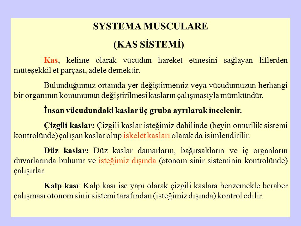 SYSTEMA MUSCULARE (KAS SİSTEMİ)