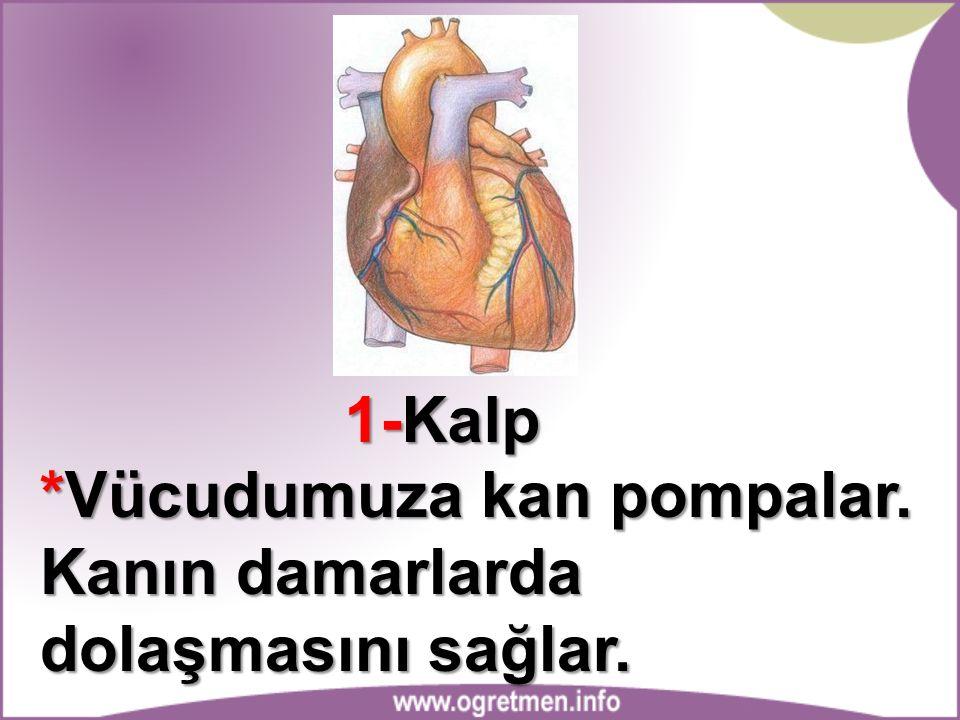 1-Kalp *Vücudumuza kan pompalar. Kanın damarlarda dolaşmasını sağlar.