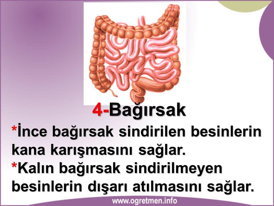 4-Bağırsak *İnce bağırsak sindirilen besinlerin kana karışmasını sağlar.