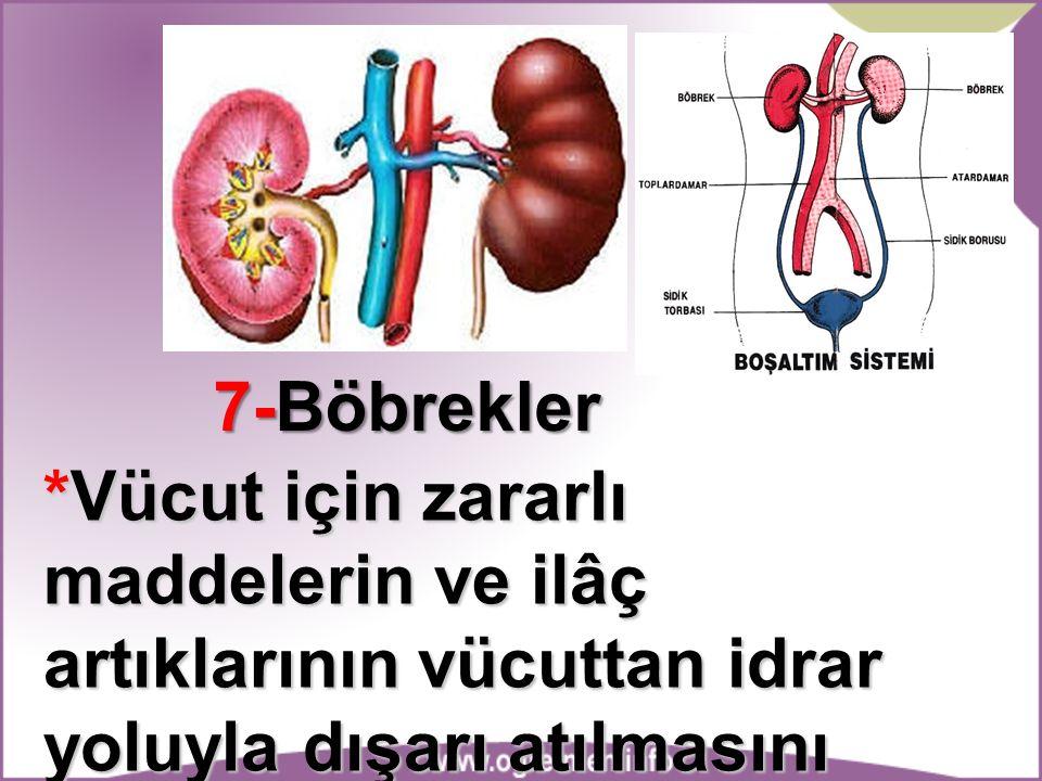 7-Böbrekler *Vücut için zararlı maddelerin ve ilâç artıklarının vücuttan idrar yoluyla dışarı atılmasını sağlar.