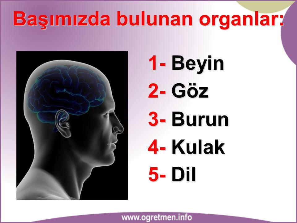Başımızda bulunan organlar: