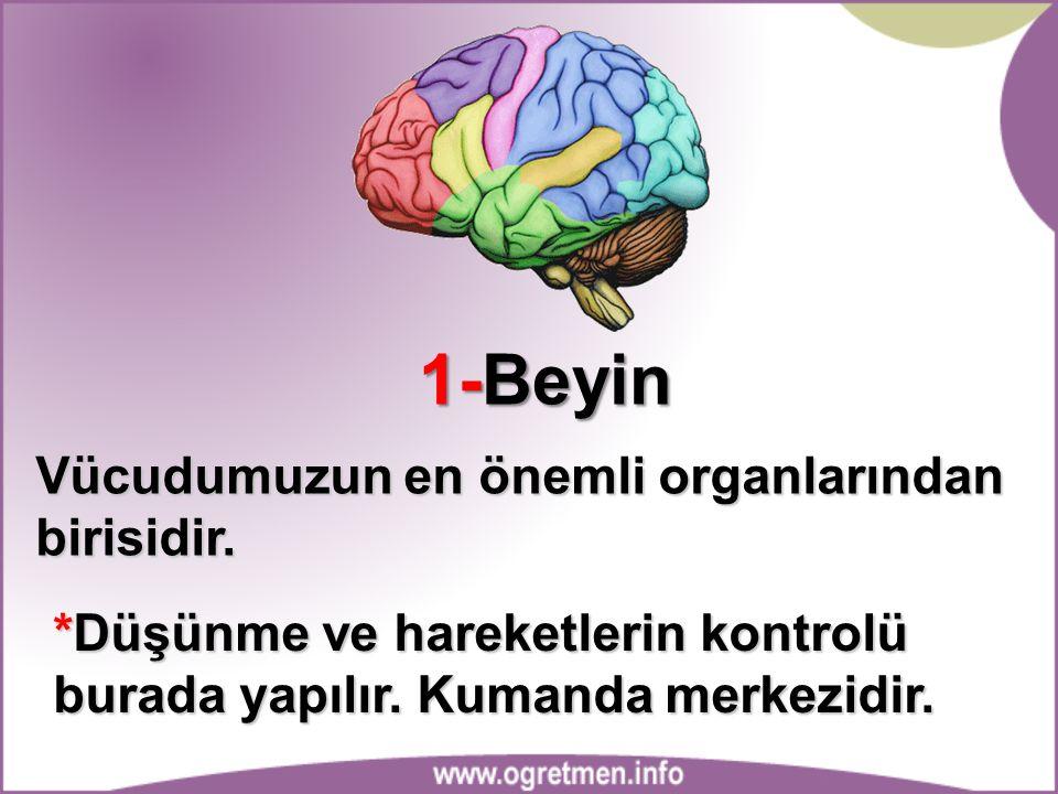 1-Beyin Vücudumuzun en önemli organlarından birisidir.