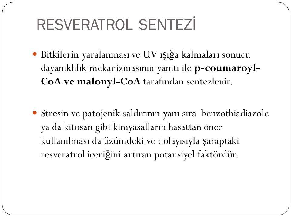RESVERATROL SENTEZİ
