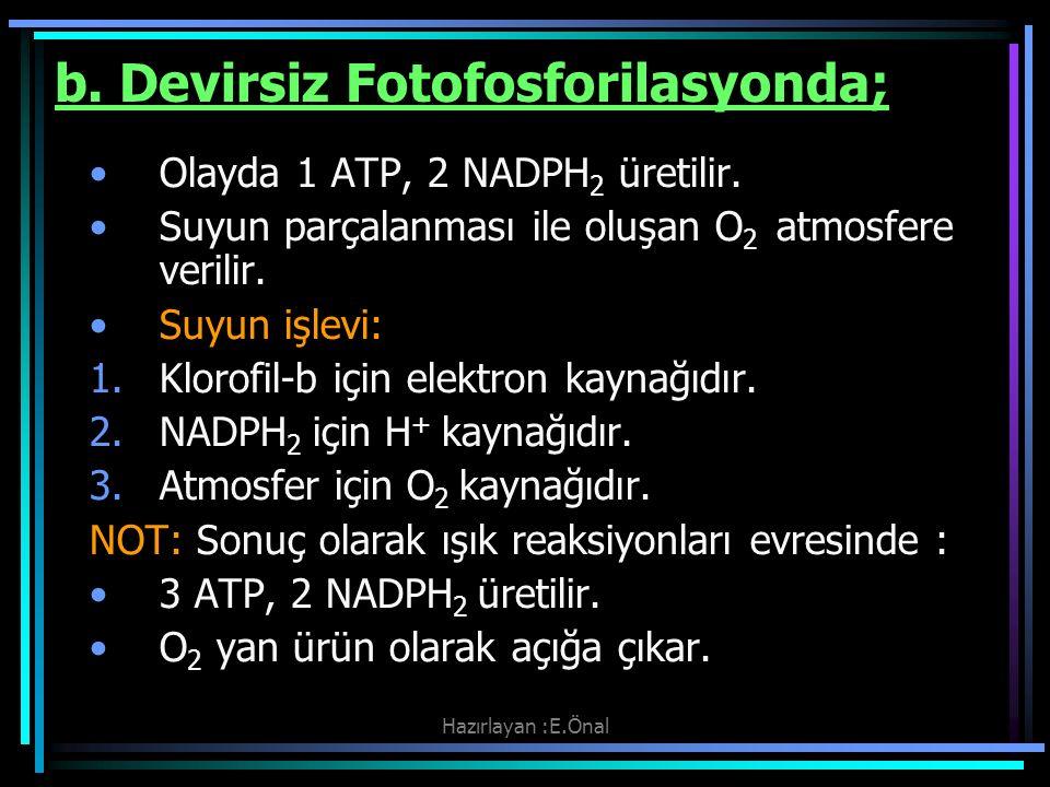 b. Devirsiz Fotofosforilasyonda;