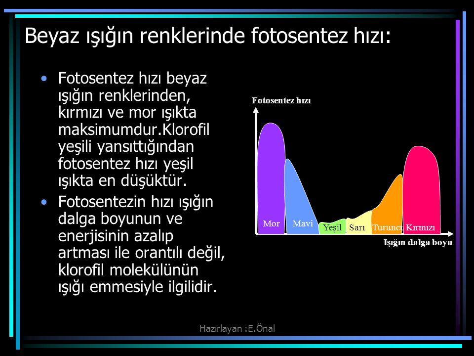 Beyaz ışığın renklerinde fotosentez hızı: