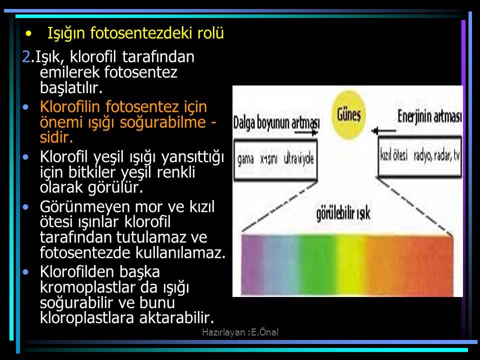 Işığın fotosentezdeki rolü