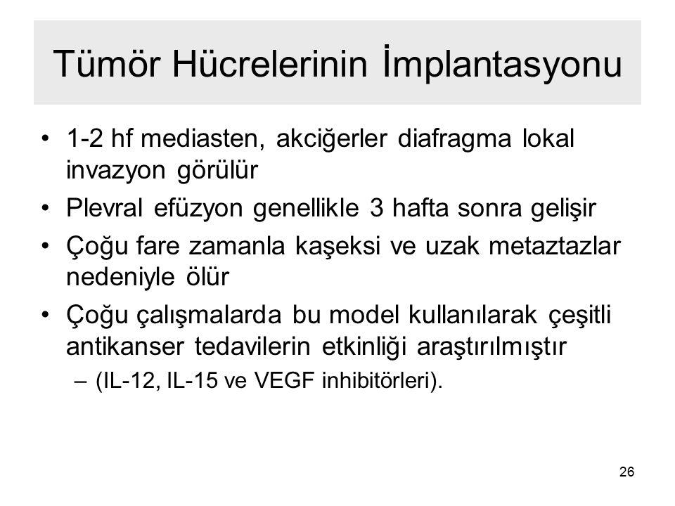 Tümör Hücrelerinin İmplantasyonu