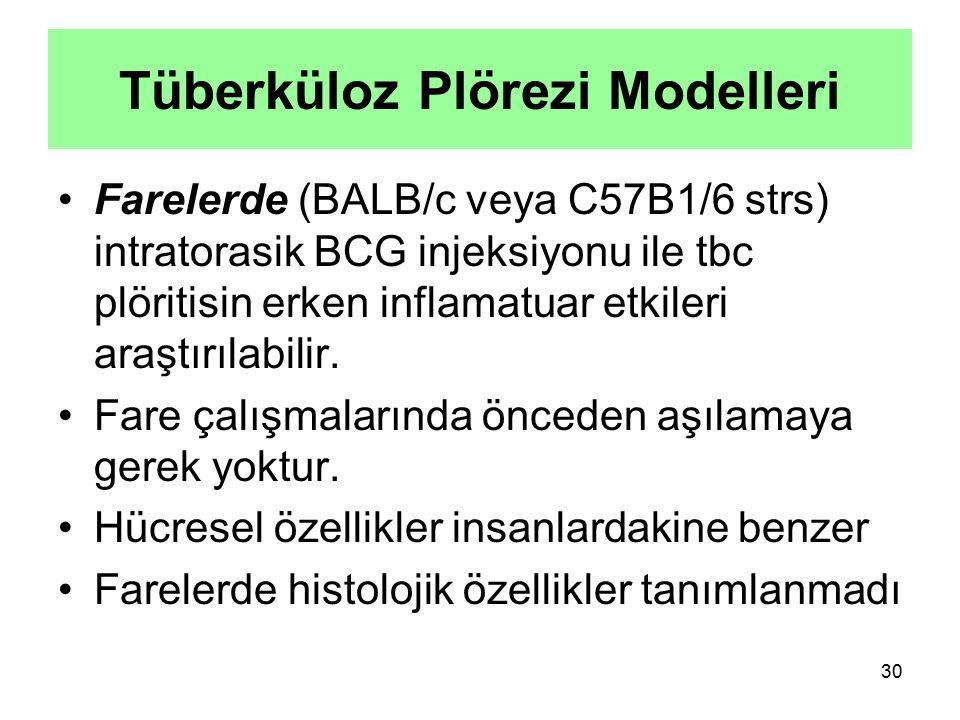 Tüberküloz Plörezi Modelleri