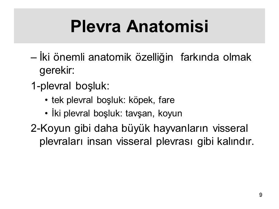 Plevra Anatomisi İki önemli anatomik özelliğin farkında olmak gerekir: