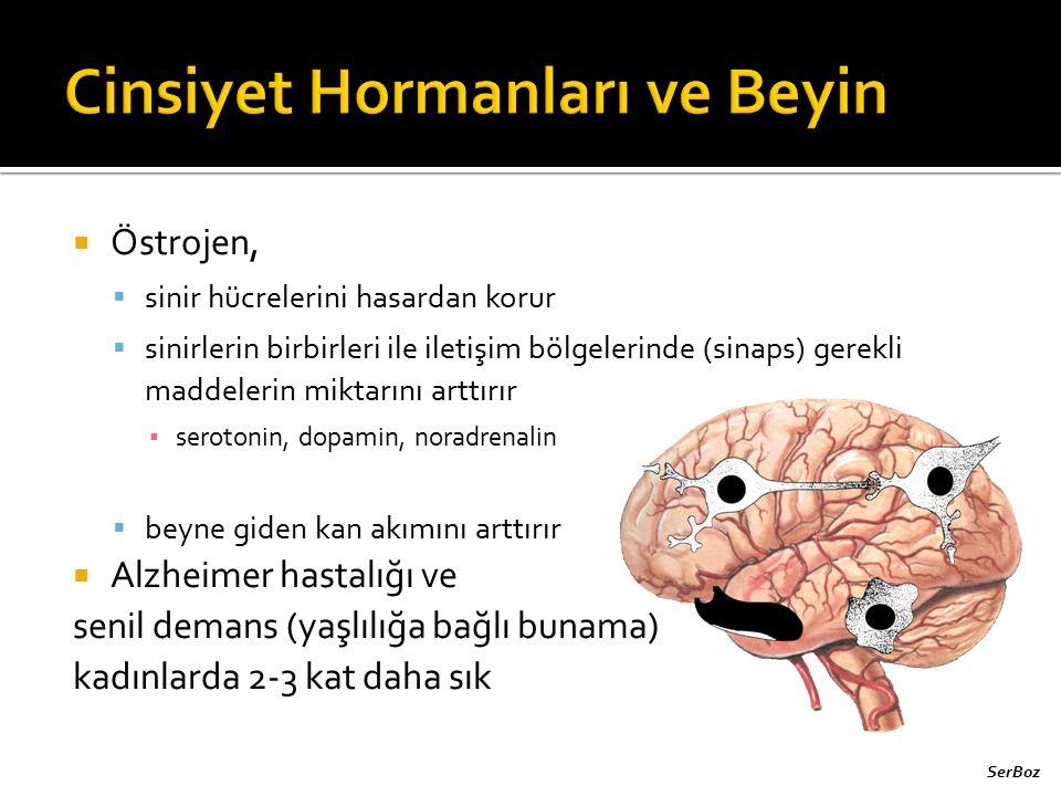 Cinsiyet Hormanları ve Beyin