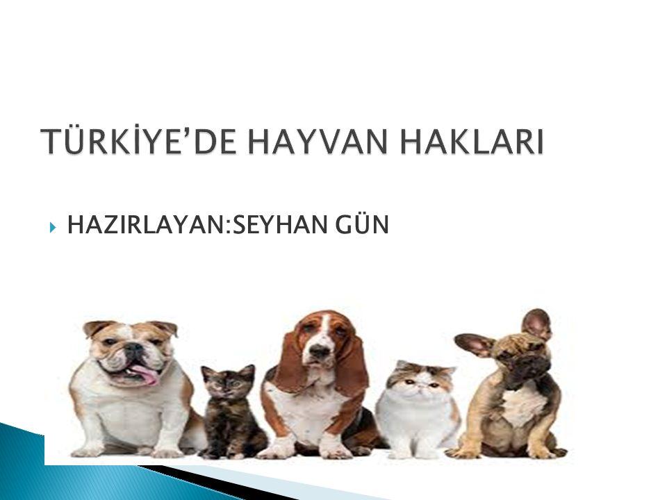TÜRKİYE'DE HAYVAN HAKLARI