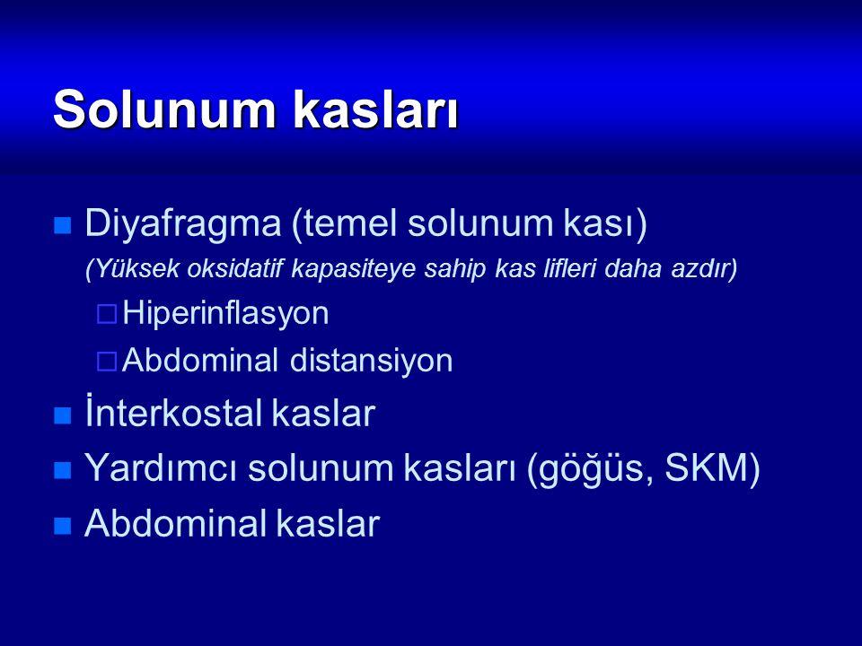 Solunum kasları Diyafragma (temel solunum kası) İnterkostal kaslar