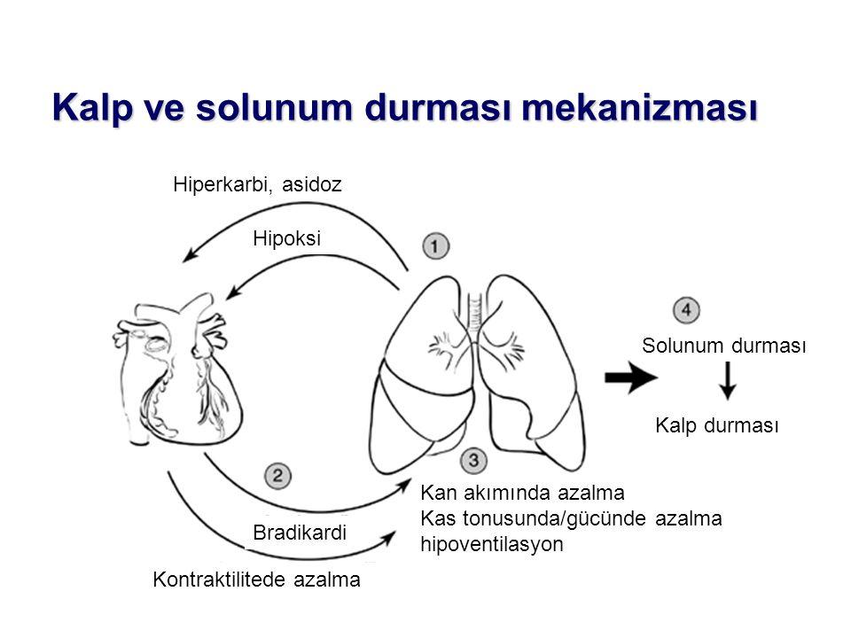 Kalp ve solunum durması mekanizması