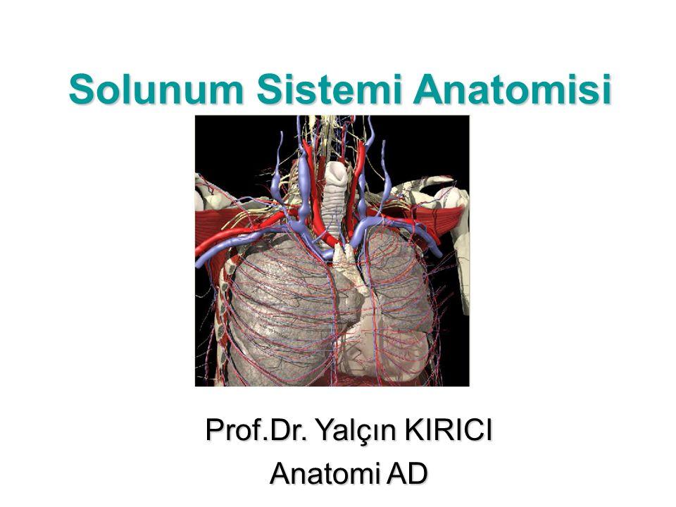 Solunum Sistemi Anatomisi