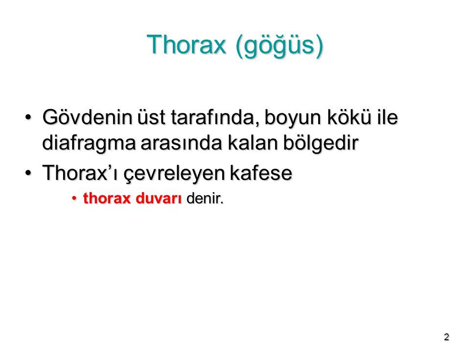 Thorax (göğüs) Gövdenin üst tarafında, boyun kökü ile diafragma arasında kalan bölgedir. Thorax'ı çevreleyen kafese.