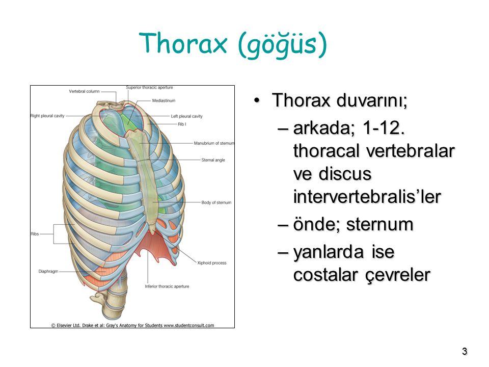 Thorax (göğüs) Thorax duvarını;