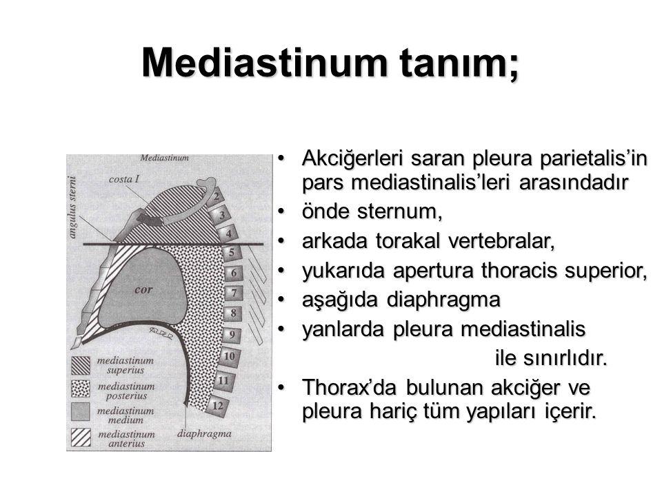 Mediastinum tanım; Akciğerleri saran pleura parietalis'in pars mediastinalis'leri arasındadır. önde sternum,