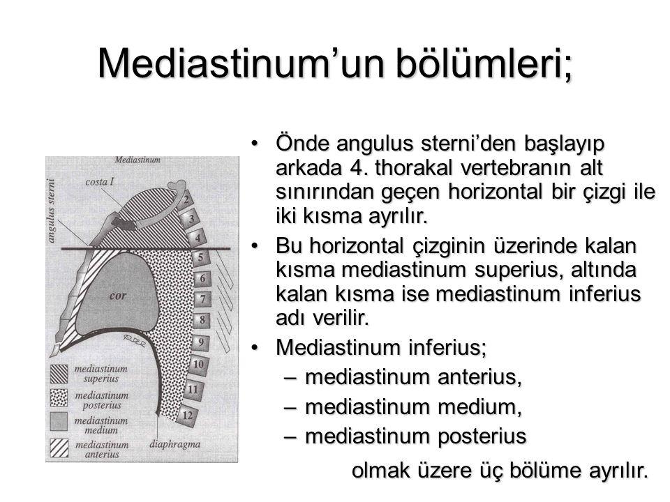Mediastinum'un bölümleri;