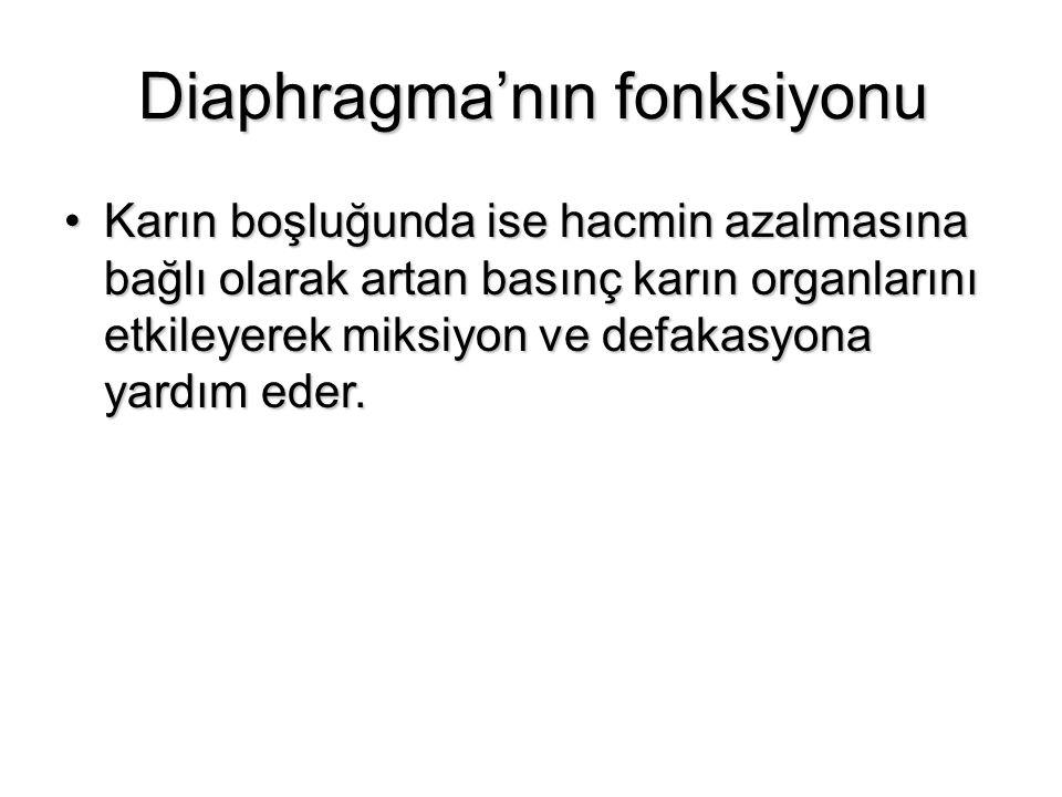 Diaphragma'nın fonksiyonu
