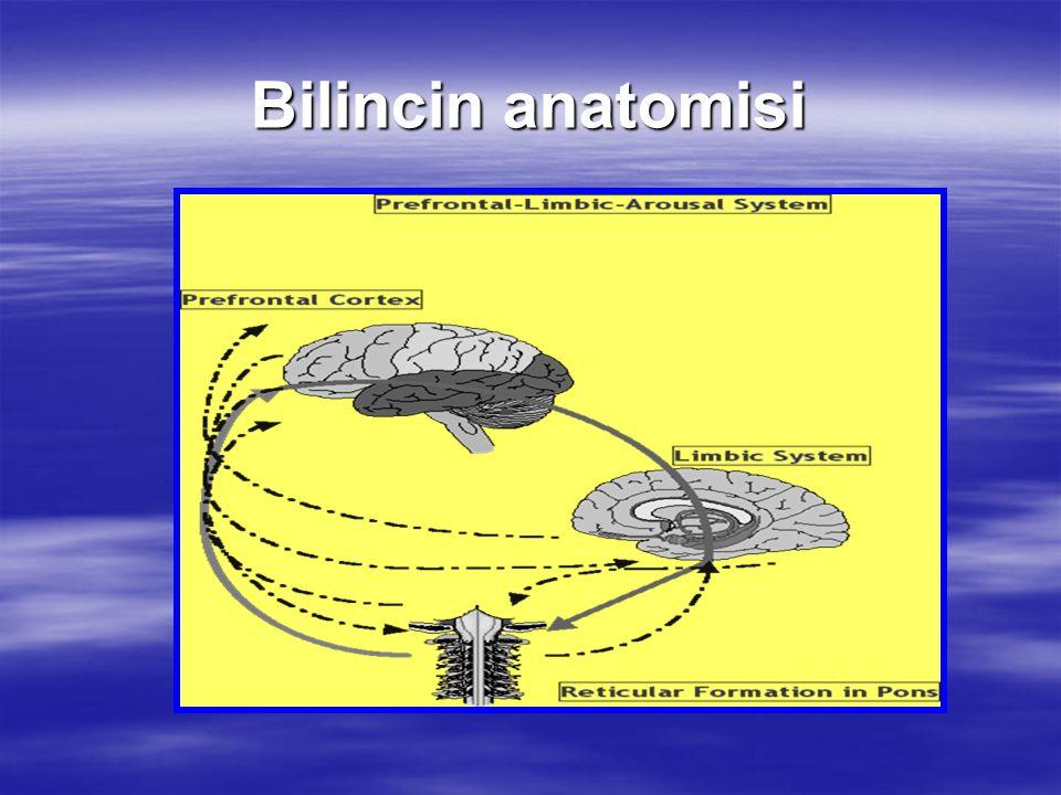 Bilincin anatomisi