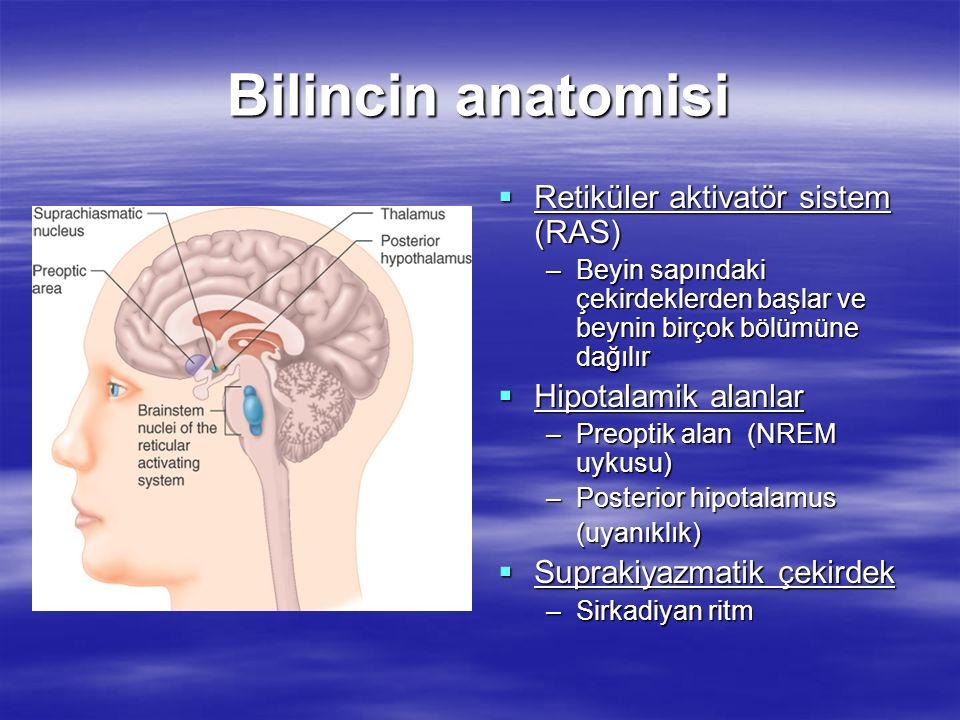 Bilincin anatomisi Retiküler aktivatör sistem (RAS)