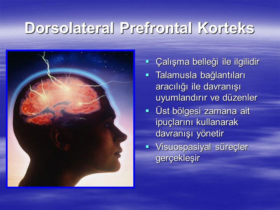 Dorsolateral Prefrontal Korteks