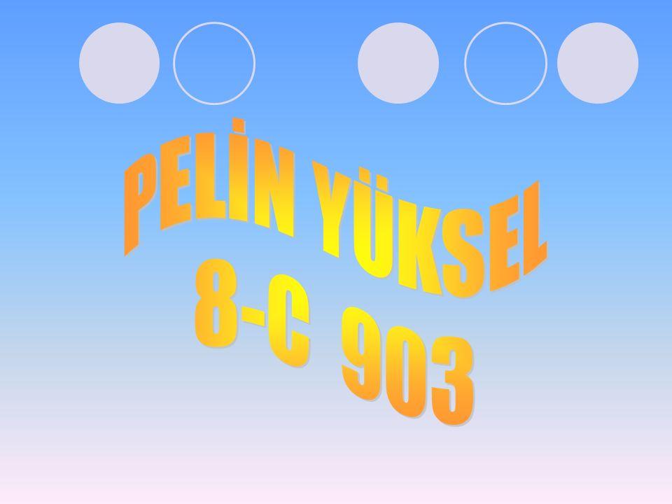 PELİN YÜKSEL 8-C 903