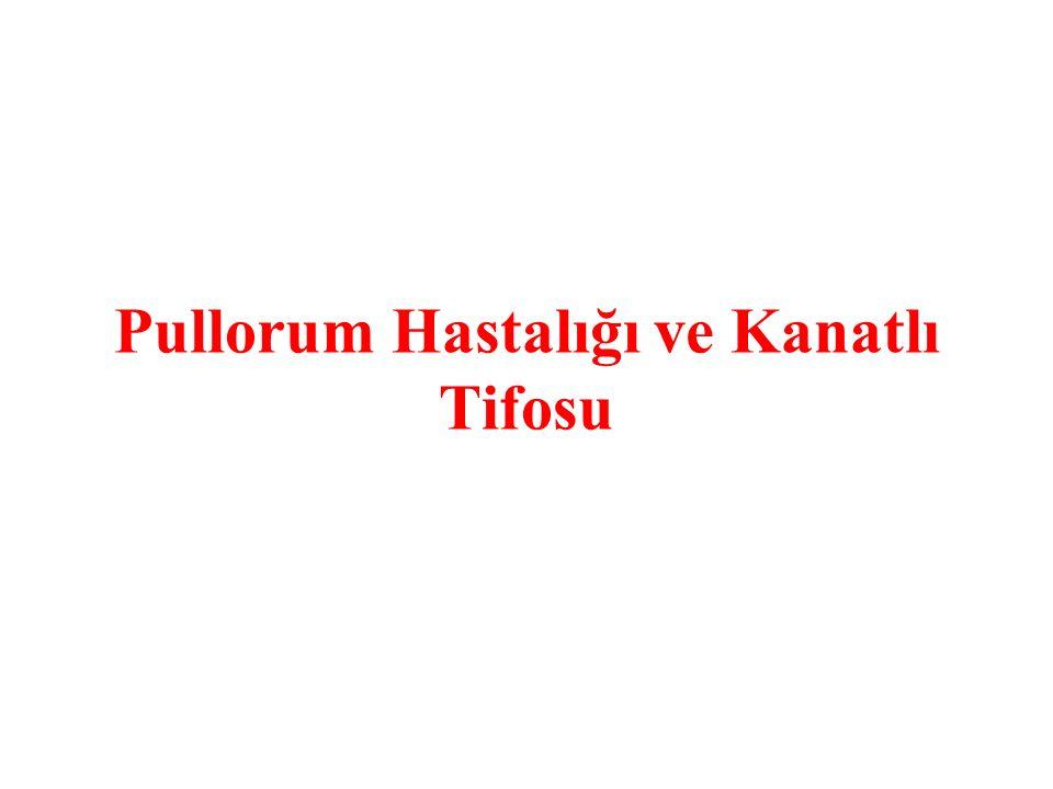 Pullorum Hastalığı ve Kanatlı Tifosu