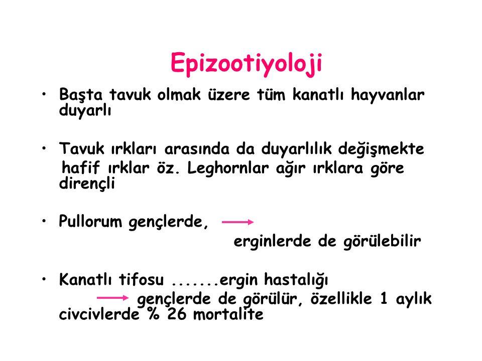 Epizootiyoloji Başta tavuk olmak üzere tüm kanatlı hayvanlar duyarlı