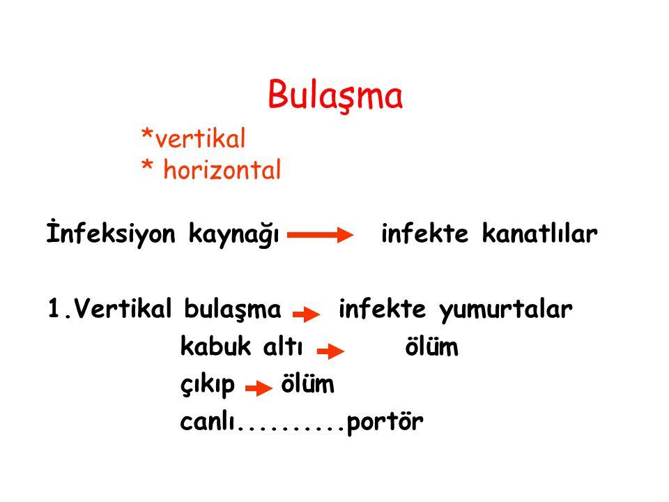 Bulaşma *vertikal * horizontal İnfeksiyon kaynağı infekte kanatlılar