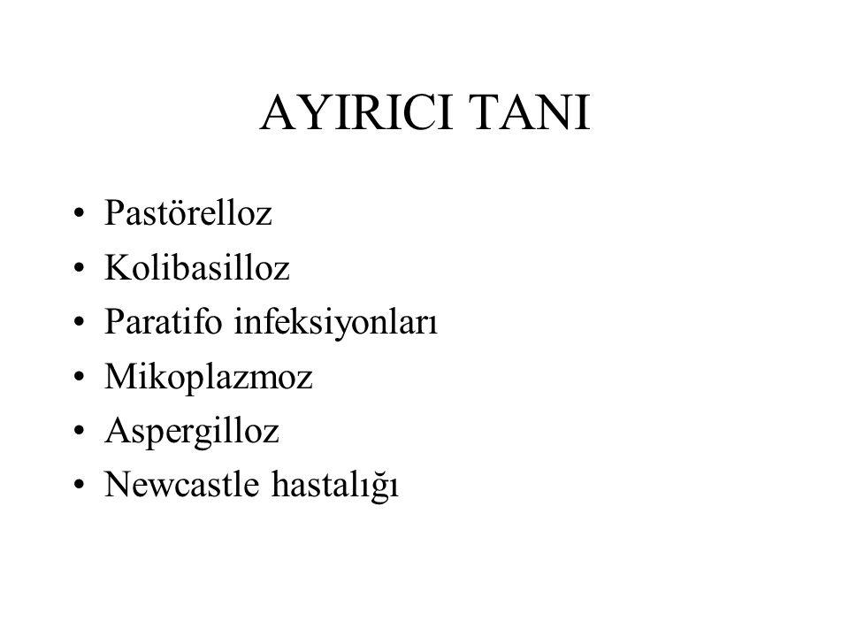 AYIRICI TANI Pastörelloz Kolibasilloz Paratifo infeksiyonları