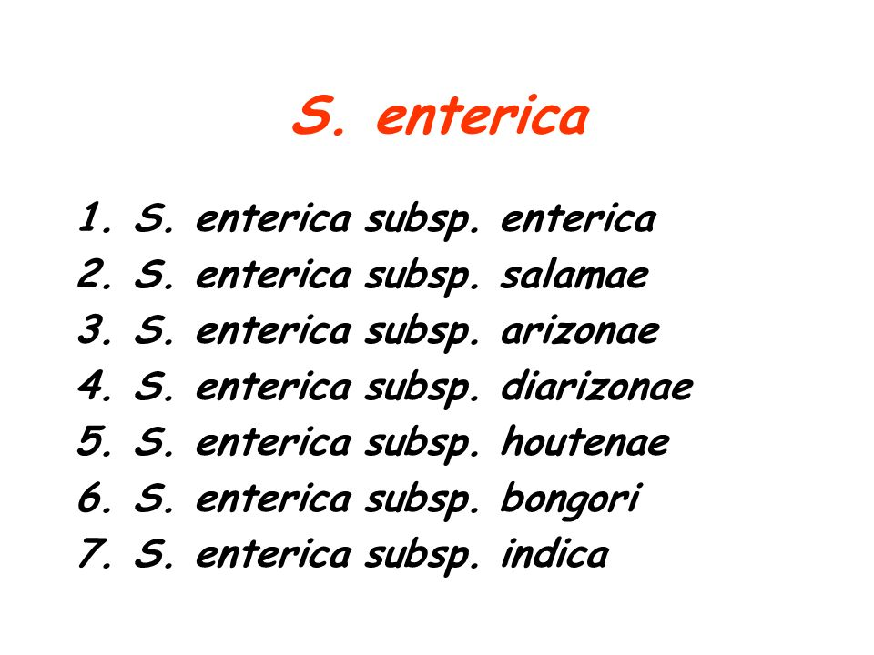 S. enterica S. enterica subsp. enterica S. enterica subsp. salamae