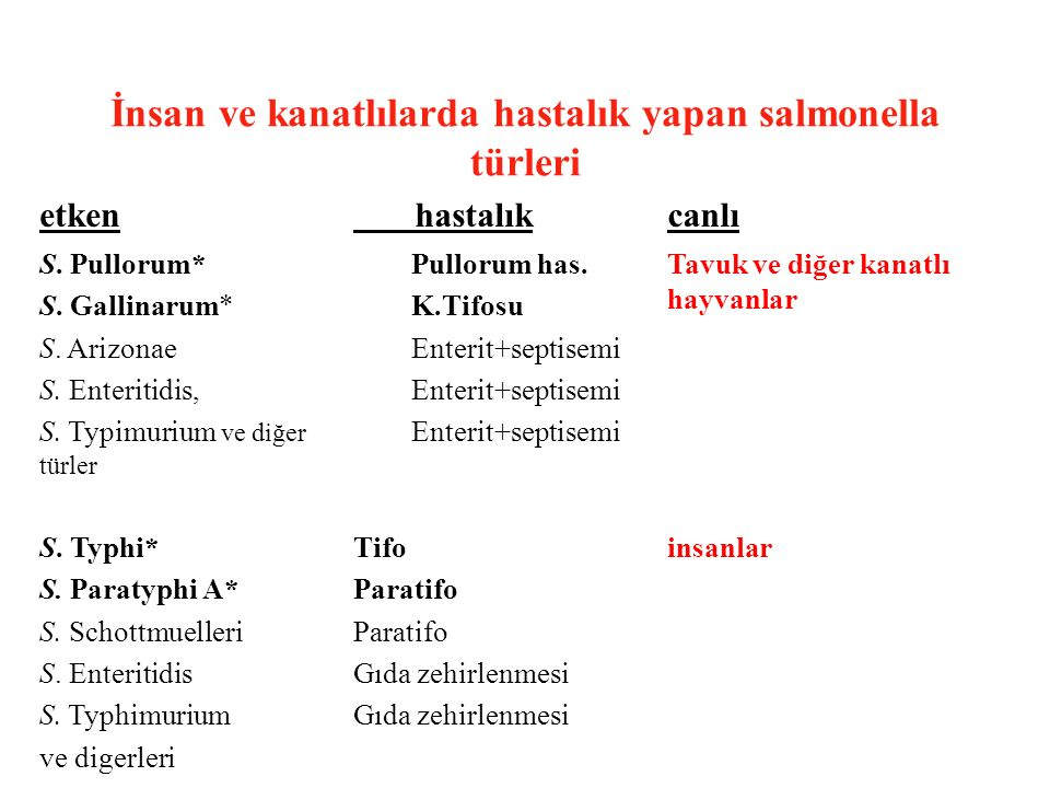 İnsan ve kanatlılarda hastalık yapan salmonella türleri
