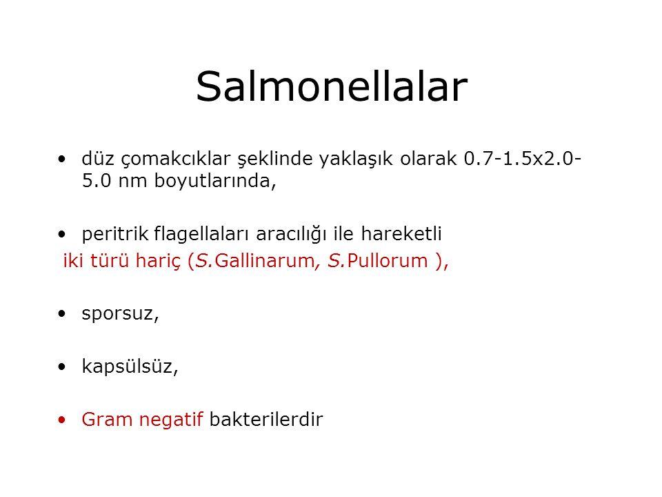 Salmonellalar düz çomakcıklar şeklinde yaklaşık olarak 0.7-1.5x2.0-5.0 nm boyutlarında, peritrik flagellaları aracılığı ile hareketli.