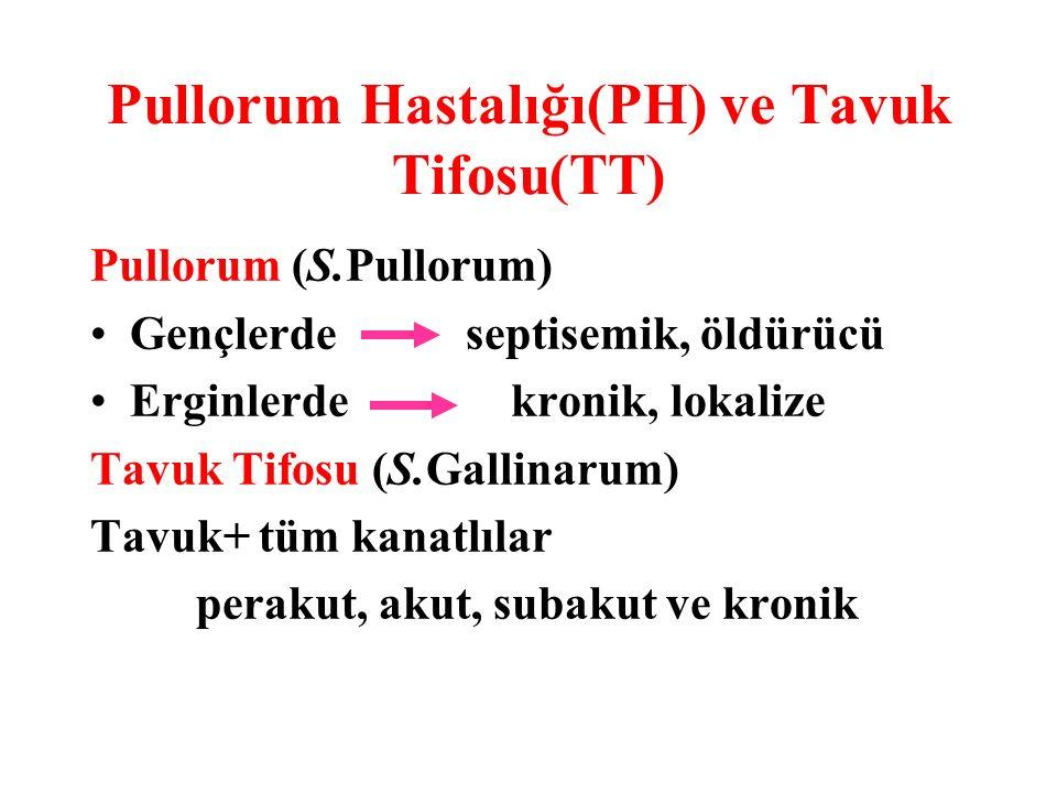 Pullorum Hastalığı(PH) ve Tavuk Tifosu(TT)