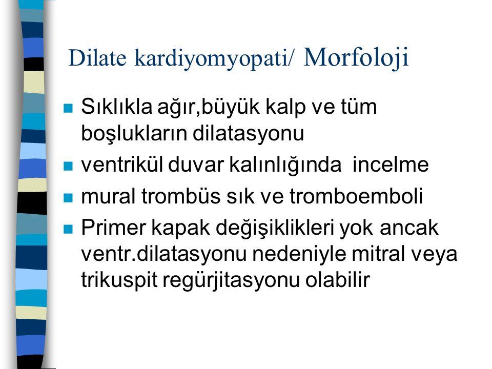 Dilate kardiyomyopati/ Morfoloji