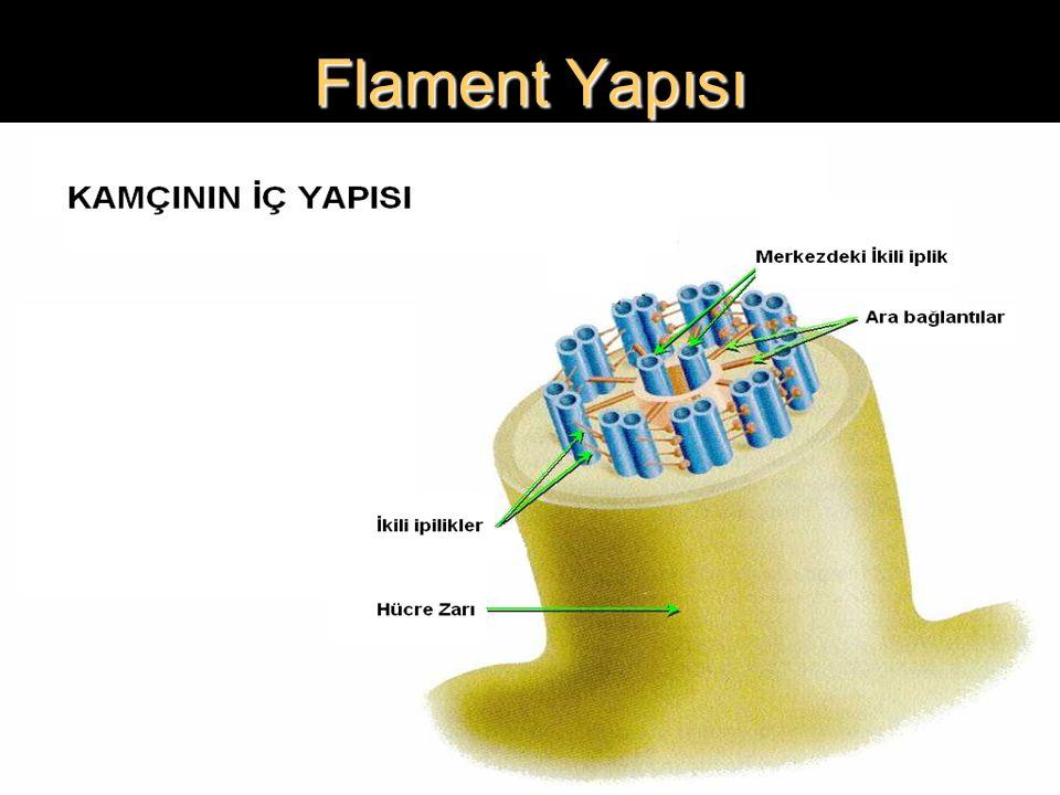 Flament Yapısı