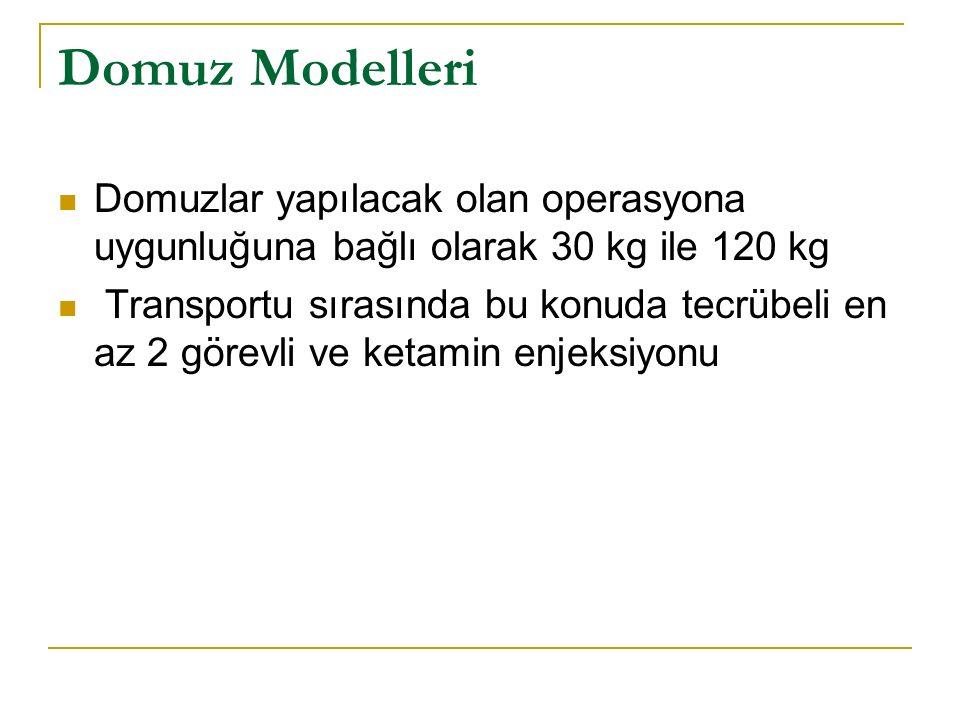 Domuz Modelleri Domuzlar yapılacak olan operasyona uygunluğuna bağlı olarak 30 kg ile 120 kg.