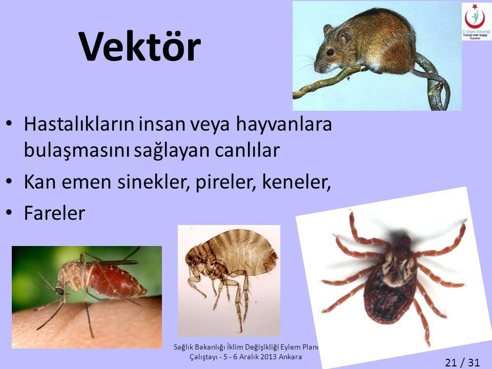 Vektör Hastalıkların insan veya hayvanlara bulaşmasını sağlayan canlılar. Kan emen sinekler, pireler, keneler,