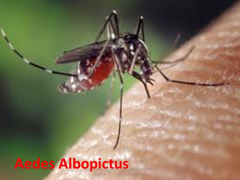 Aedes Albopictus Sağlık Bakanlığı İklim Değişikliği Eylem Planı Çalıştayı - 5 - 6 Aralık 2013 Ankara.