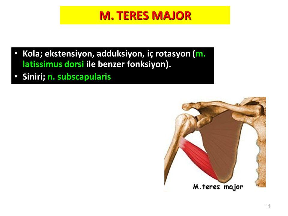 M. TERES MAJOR Kola; ekstensiyon, adduksiyon, iç rotasyon (m. latissimus dorsi ile benzer fonksiyon).