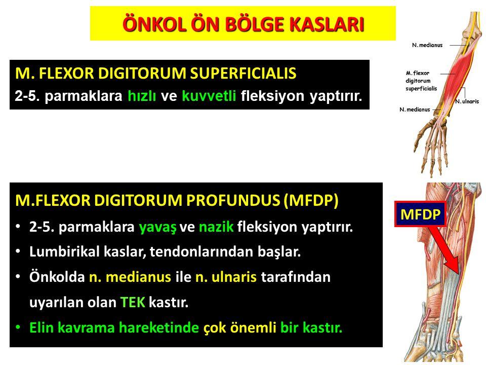 ÖNKOL ÖN BÖLGE KASLARI M. FLEXOR DIGITORUM SUPERFICIALIS