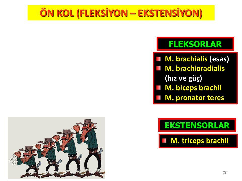 ÖN KOL (FLEKSİYON – EKSTENSİYON)