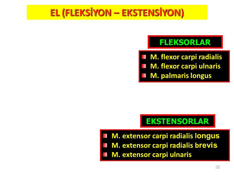 EL (FLEKSİYON – EKSTENSİYON)