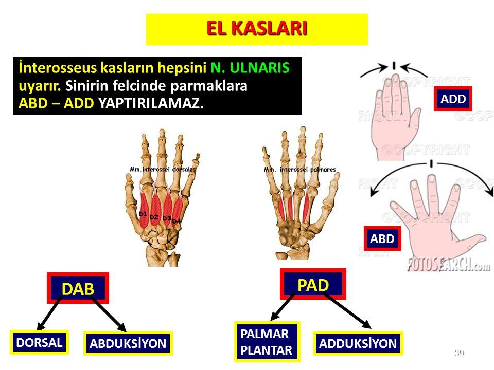 EL KASLARI PAD DAB İnterosseus kasların hepsini N. ULNARIS