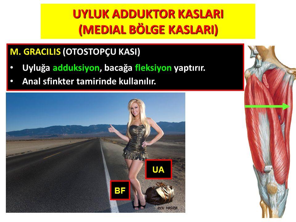 UYLUK ADDUKTOR KASLARI (MEDIAL BÖLGE KASLARI)