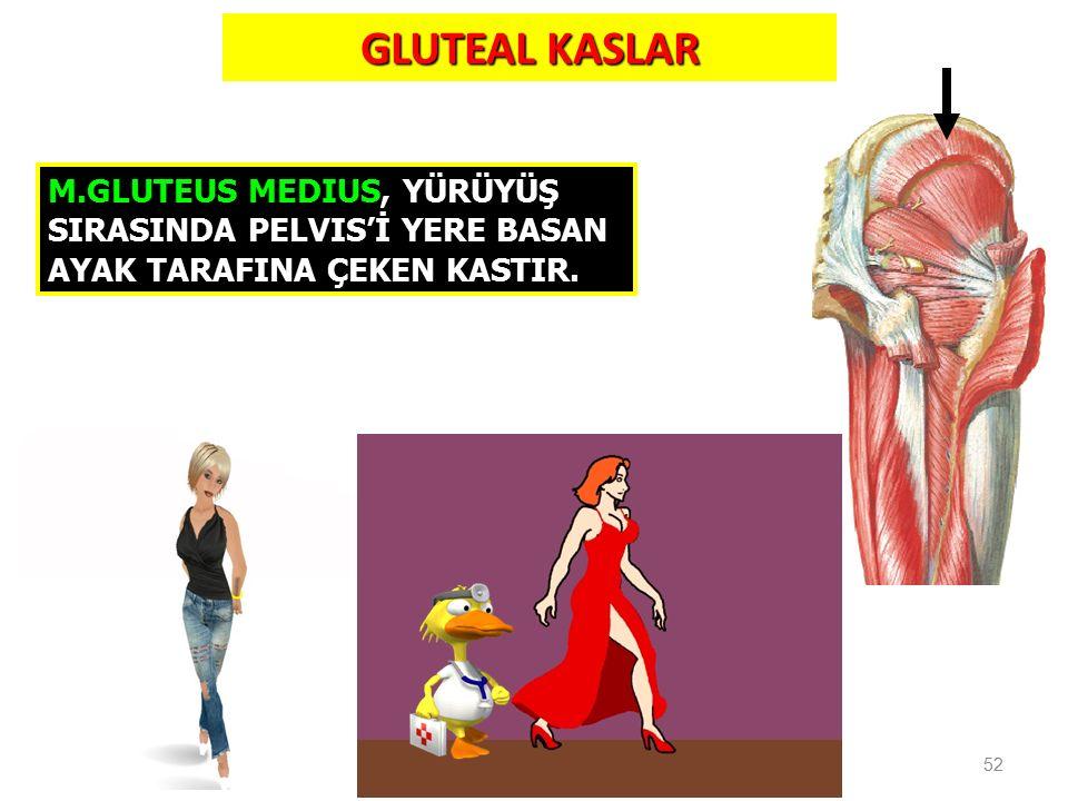 GLUTEAL KASLAR M.GLUTEUS MEDIUS, YÜRÜYÜŞ SIRASINDA PELVIS'İ YERE BASAN AYAK TARAFINA ÇEKEN KASTIR.