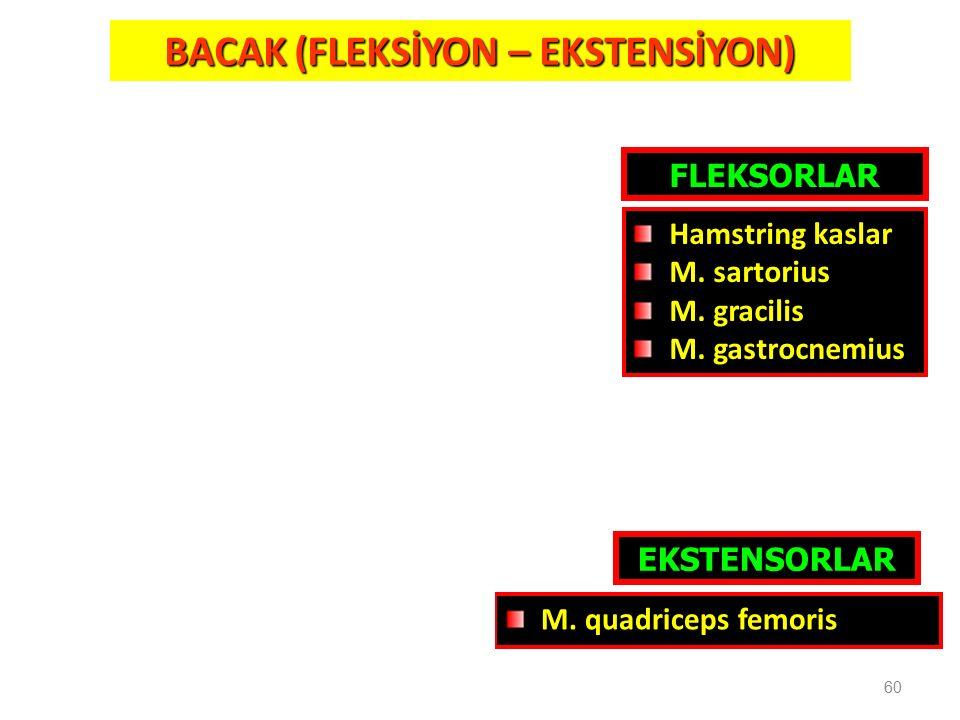BACAK (FLEKSİYON – EKSTENSİYON)