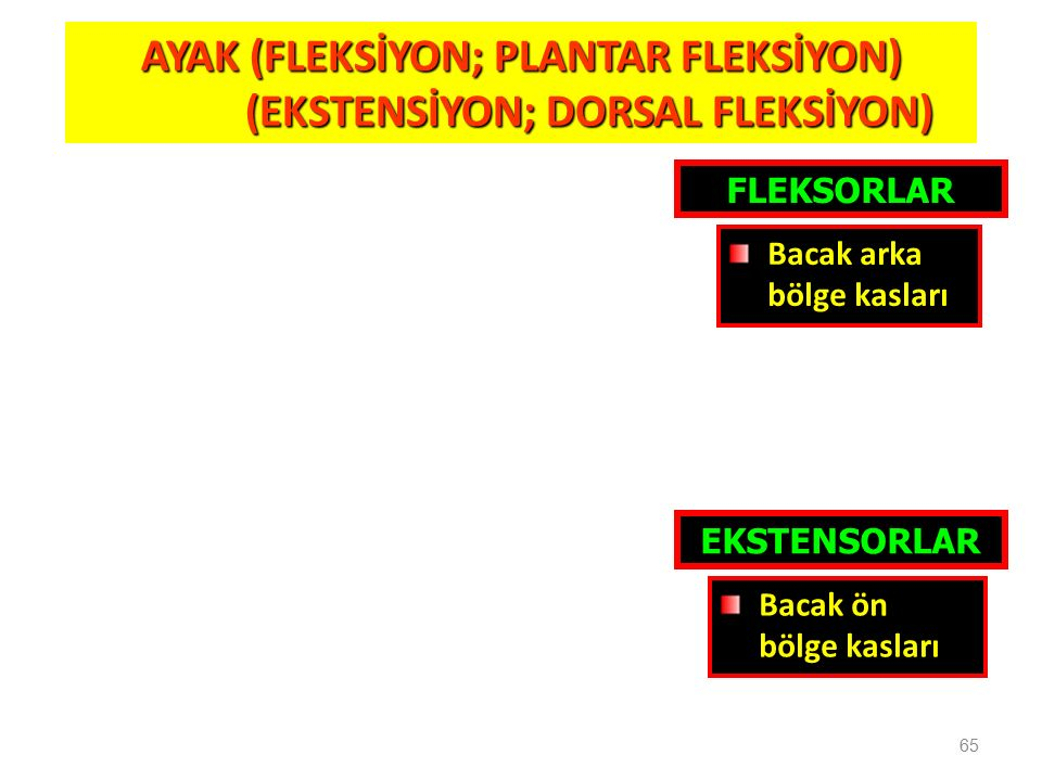 AYAK (FLEKSİYON; PLANTAR FLEKSİYON) (EKSTENSİYON; DORSAL FLEKSİYON)